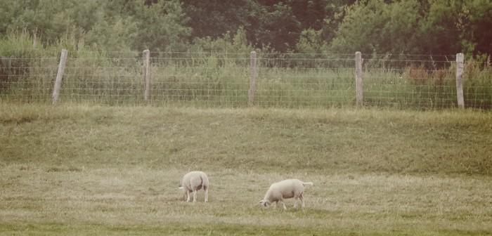 BEW_hollands landschap uitjes lammetjes 4mamamagazine