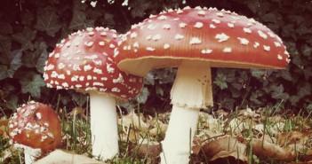Jippie! Het is weer herfst dus ga je ook weer met je kinderen op pad om paddenstoelen te zoeken?